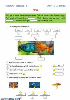 Interactive worksheet Fish