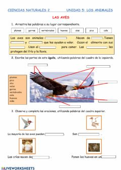 Interactive worksheet Las aves
