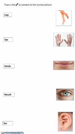 Interactive worksheet Trace and match body parts