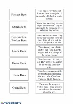 Interactive worksheet Kinds of bees