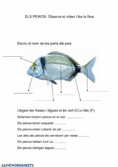 Interactive worksheet Els peixosw