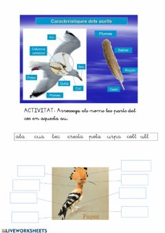 Interactive worksheet Parts del cos de les aus