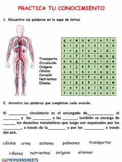 Interactive worksheet Sistema ciruculatorio