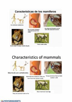 Ficha interactiva Mammals Vocabulary