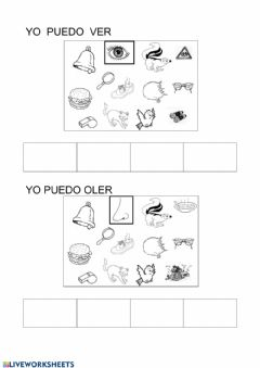 Interactive worksheet Los sentidos1