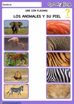 Interactive worksheet Pieles Animales
