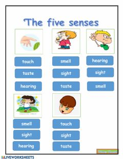 Ficha interactiva Five senses