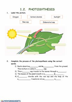 Ficha interactiva Photosynthesis