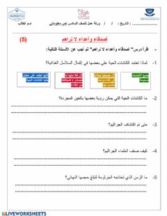 Interactive worksheet 6d
