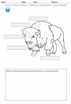 Interactive worksheet How to Draw a Bison - Labeling - Adaptations and Features