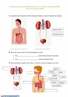 Interactive worksheet Natural Sciences: Diet, digestion and excretion