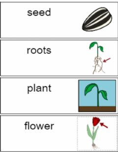 Interactive worksheet Parts of a Plant Vocabulary Speaking Exercise