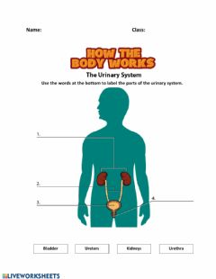 Interactive worksheet Body Systems Label