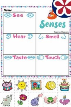 Interactive worksheet Five Senses