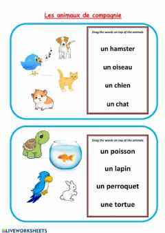 Interactive worksheet Animaux de compagnie-pets in French