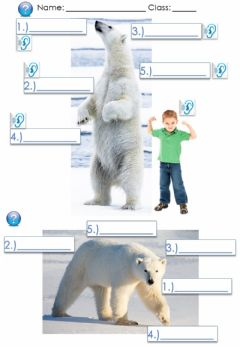 Interactive worksheet Polar Bears Page 2