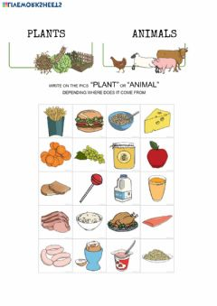 Ficha interactiva Where does food come from?