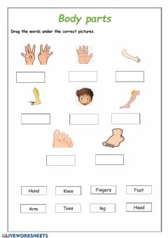 Interactive worksheet Body parts drag and drop
