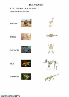 Interactive worksheet Relaciona foto-esquelet animal