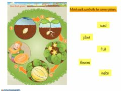 Interactive worksheet The cycle of a plant