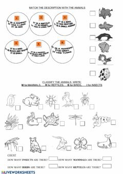 Ficha interactiva Animals classification