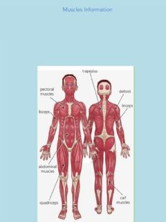 Interactive worksheet Unit 2 Muscles Information