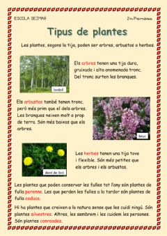 Interactive worksheet Tipus de plantes