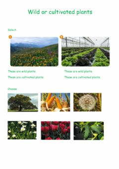 Interactive worksheet Wild and cultivated plants