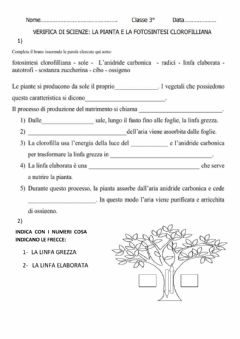 Interactive worksheet La fotosintesi- clorofilliana