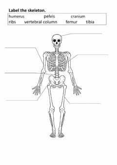 Interactive worksheet Label the bones