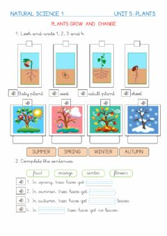 Interactive worksheet Plants grow and change