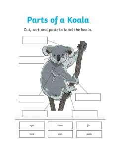 Interactive worksheet Labelling parts of Koala