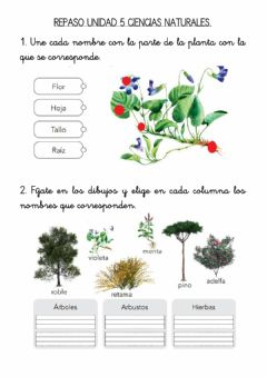Interactive worksheet Repaso unidad 5 ciencias naturales