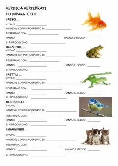 Interactive worksheet Verifica vertebrati 2