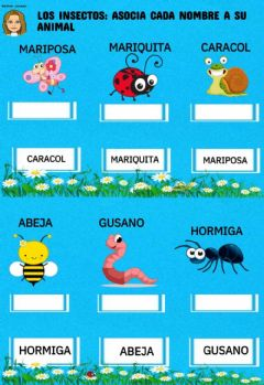 Interactive worksheet Los insectos: asocia cada nombre con su animal