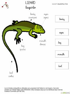 Interactive worksheet Body parts reptile