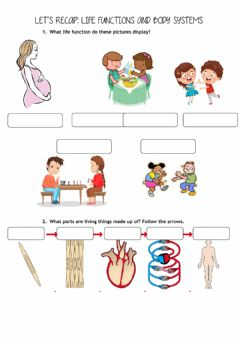 Interactive worksheet Life functions and body systems