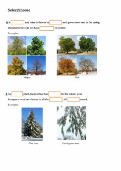 Interactive worksheet Deciduous and evergreen plants
