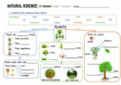 Interactive worksheet Plants mindmap (Unit 1)