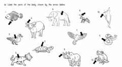Ficha interactiva Parts of animals