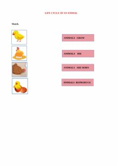 Interactive worksheet Life cycle of an animal