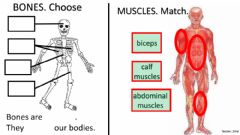 Ficha interactiva Bones, muscles and joints