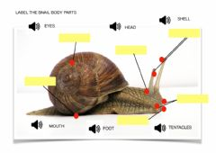 Ficha interactiva Parts of a snail