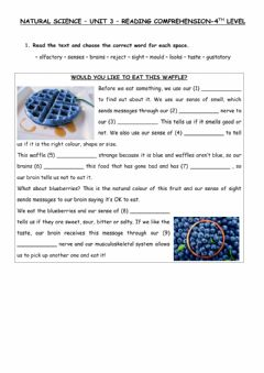Interactive worksheet Reading: waffles