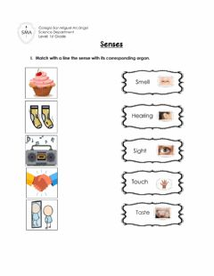 Interactive worksheet Senses - Sight