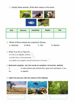 Interactive worksheet All about animals
