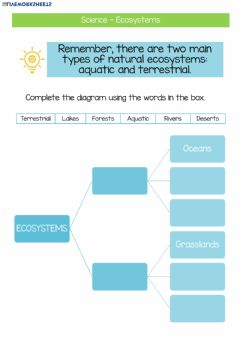 Ficha interactiva Complete the diagram using the words in the box.