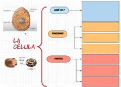 Interactive worksheet La célula