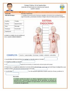 Interactive worksheet Guia de Ciencias Naturales