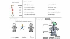 Interactive worksheet Body systems reproductive and endocrine systems